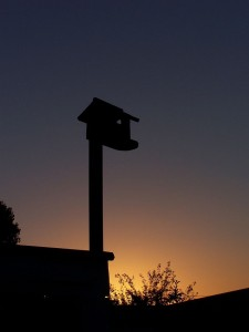 Birdhouse at Dusk
