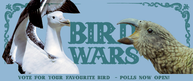 Forest and Bird's Annual Bird of the Year Competition